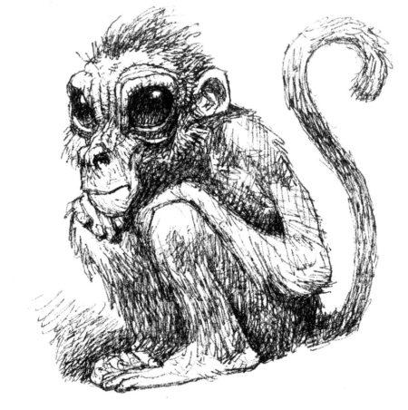 l'armée du seul singe