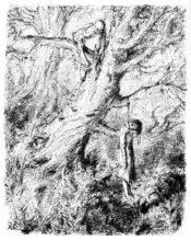 vieille branche
