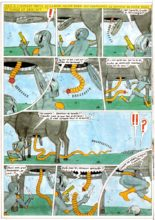 barneidor-taureau-conkhobar-13
