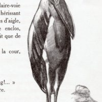 deluermoz-demaison-livre-betes-appelle-sauvages-11-b