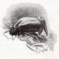 deluermoz-demaison-livre-betes-appelle-sauvages-15-b