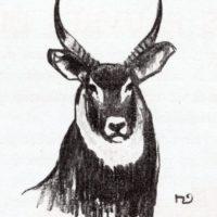 deluermoz-demaison-livre-betes-appelle-sauvages-31-b