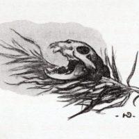 deluermoz-demaison-livre-betes-appelle-sauvages-38-b