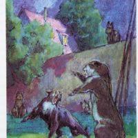 busch-cats-co-06l