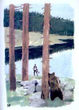 beuville-couleurs-livre-nature-12