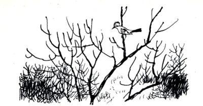 beuville-nb-livre-nature-19