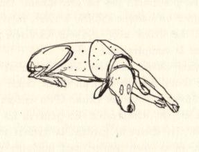 beuville-chasseur-chien-arret-03