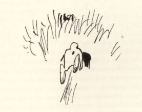 beuville-chasseur-chien-arret-14