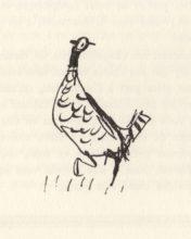 beuville-chasseur-chien-arret-18
