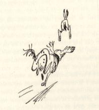 beuville-chasseur-chien-arret-21
